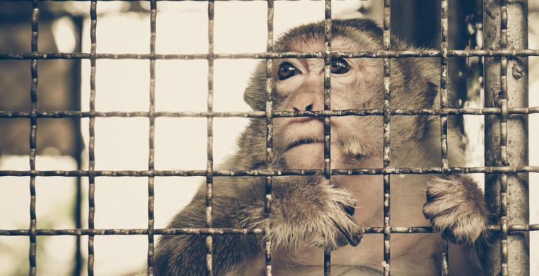 动物实验监管机构的作用